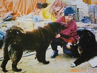 share.setitagila.ru/images/478590foto6.jpg