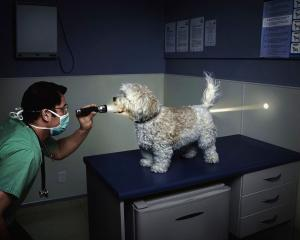 126436Veterinary_Care_for_Funny_Dog.jpg